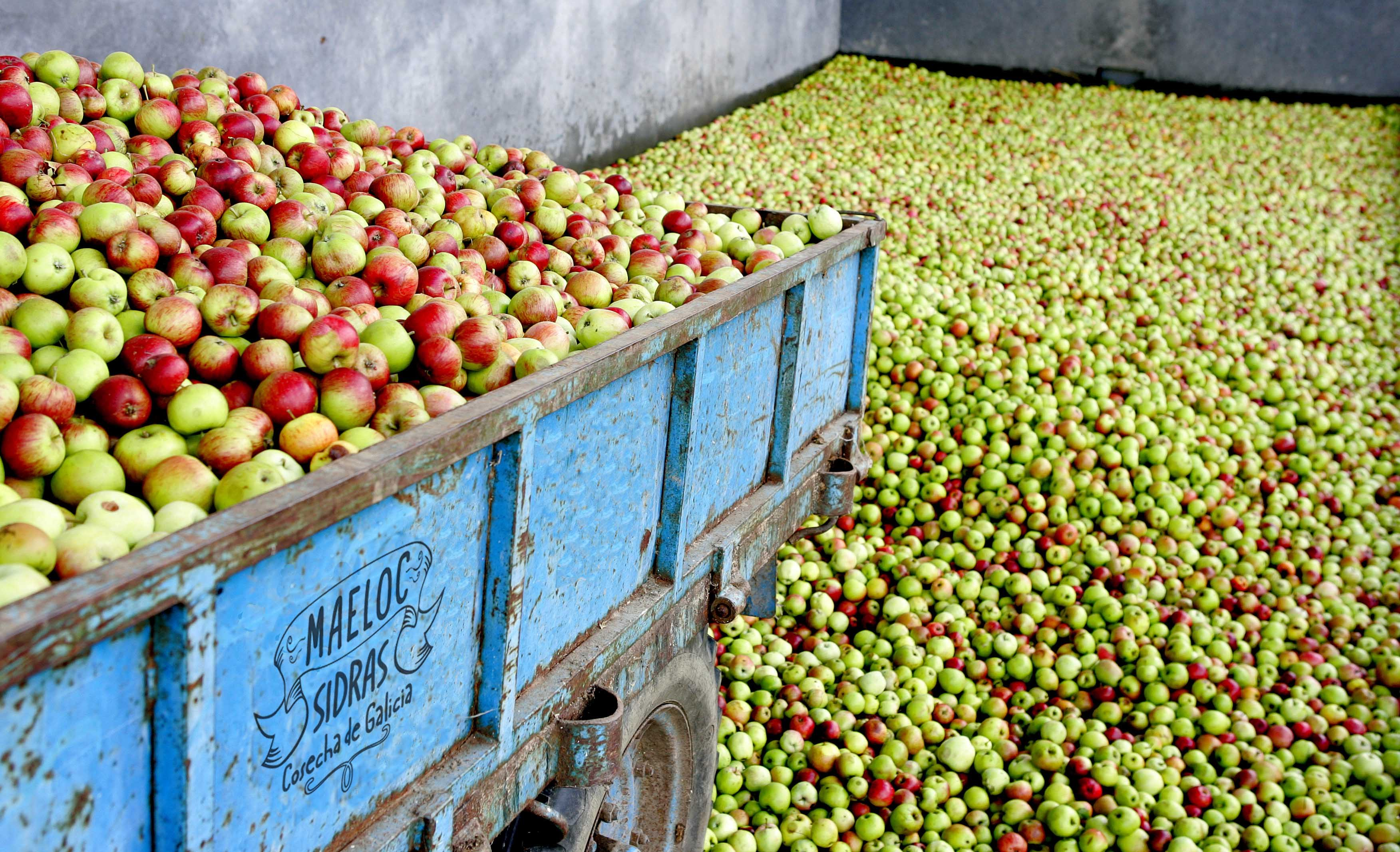 Maeloc Cider Lifestyle Image (Apple Cart)